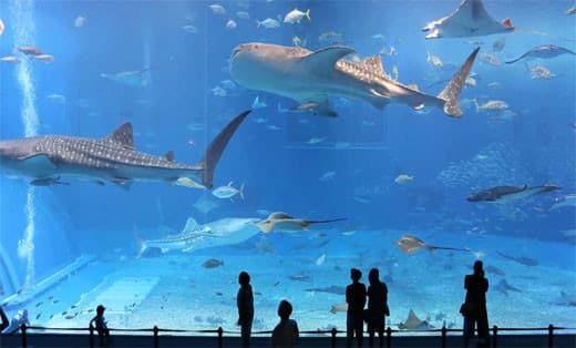 underwater-zoo-names-dubai-aquarium